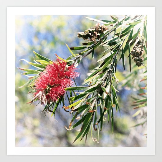 Beautiful Red Bottle Brush Art Print