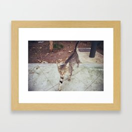 Cat4 Framed Art Print