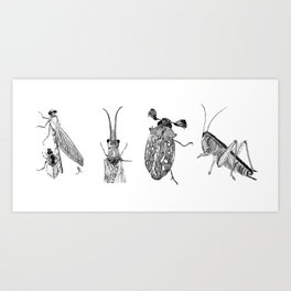 Arthropods Art Print