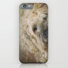 Wheaten Terrier - Let Sleeping Dogs Lie iPhone Case