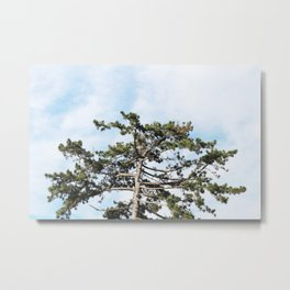 Fir tree Metal Print