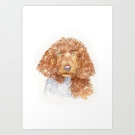 Cockapoo portrait Art Print