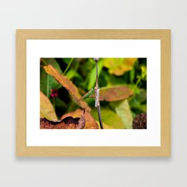 Conehead Cricket Framed Art Print