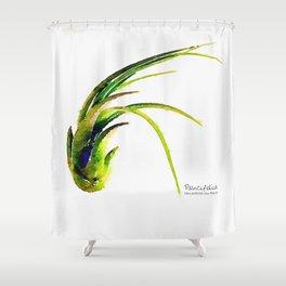 Tillandsia Paucifolia Air Plant Watercolors Shower Curtain