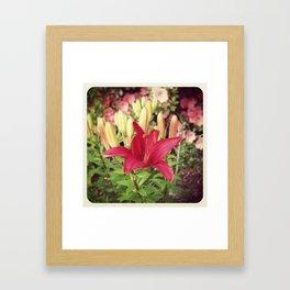 Asiatic Lilly Framed Art Print
