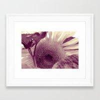 sunflower Framed Art Prints featuring Sunflower by Laake-Photos