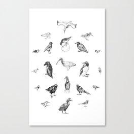 Manx Fauna - (British) Birds Canvas Print
