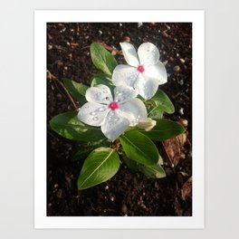 Perfect Dewdrops Art Print