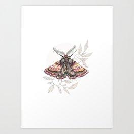 Wild Moth Art Print