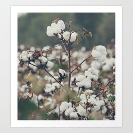 Cotton Field 8 Art Print