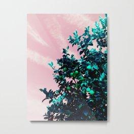 fairfax lemon tree Metal Print