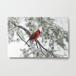Wet Snow Cardinal (vertical) Metal Print