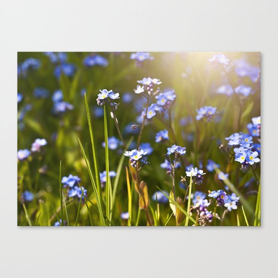 Forget me not flowers in sunlight Canvas Print