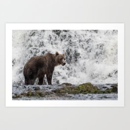 Grizzly bear in front of waterfall Art Print