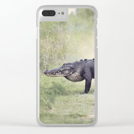 Large American Alligator walking in the wetlands Clear iPhone Case