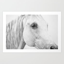 Horse Photography | Wildlife Art | Farm animal | Horse Eye Closeup by Magda Opoka Art Print