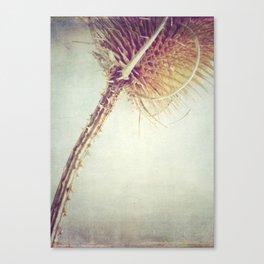 Teasel Stem Canvas Print