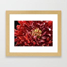 Flower Nova Framed Art Print