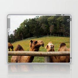 Camel Kisses Laptop & iPad Skin