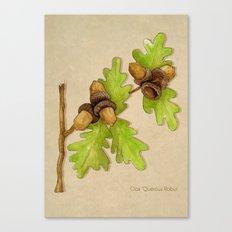 Quercus Robur Canvas Print