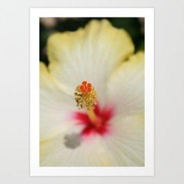 Close Up of Stamen And Pollen Yellow Hibiscus  Art Print