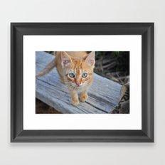 Kitty Cat Framed Art Print