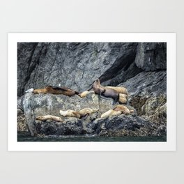 Group of Female Sea Lions and Young Art Print