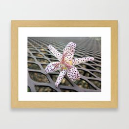 Toad Lily Framed Art Print