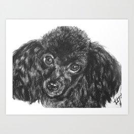 Black poodle Art Print
