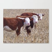 cows Canvas Prints featuring Cows by DownSpriggLane