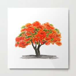 flame of the forest tree Metal Print