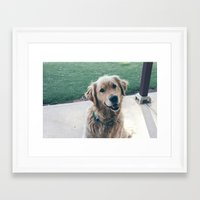 golden retriever Framed Art Prints featuring Golden Retriever by CallieDavis
