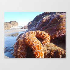Sun Bathing Canvas Print