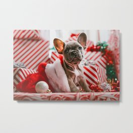 Red & White Christmas Pup (Color) Metal Print
