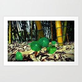 Nasturtiums & Bamboo Art Print