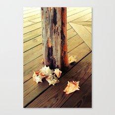Belizean Shells Canvas Print