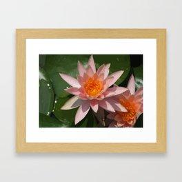Beautiful Peach Waterlily Vector Framed Art Print