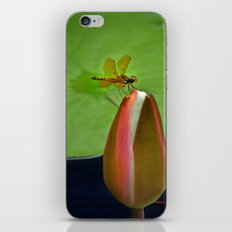 Lily Pond Amberwing iPhone & iPod Skin