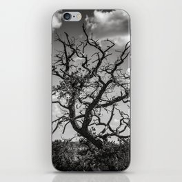 Ancient Tree, Survivor, Alive iPhone Skin