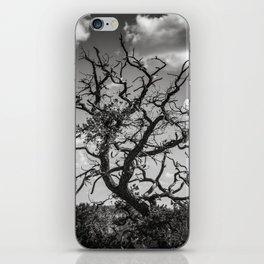 Ancient Tree, Survivor, Alive iPhone Skin