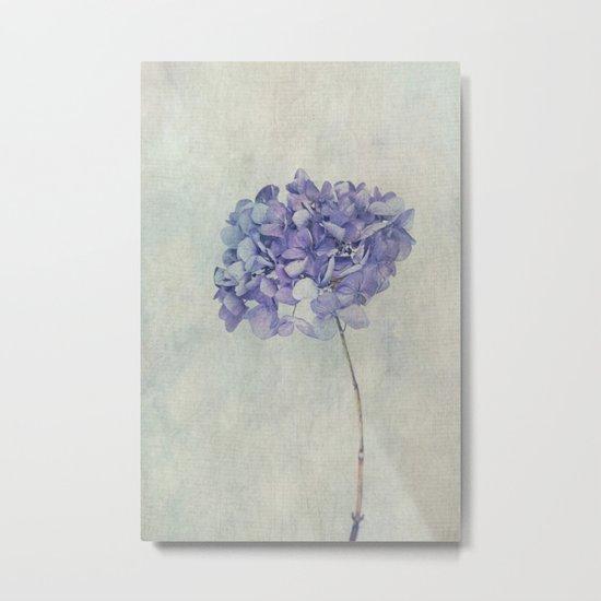 Beautiful Blue Hydrangea Metal Print
