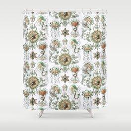 Ernst Haeckel - Trachomedusae (Jellyfish) Shower Curtain