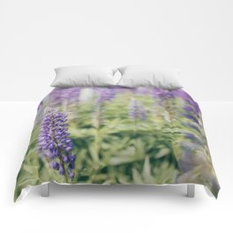 Lupins 2 Comforters