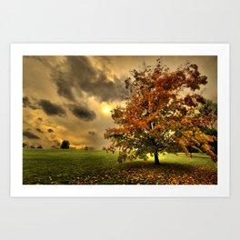 Red Maple Tree  Art Print