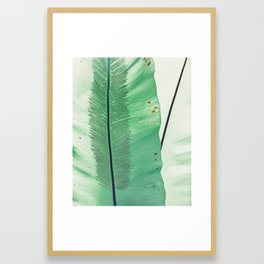 feather in a leaf Framed Art Print
