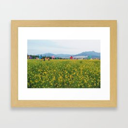 Rapeseed yellow flowers in Busan Framed Art Print