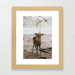 Nara, Japan Deer Fawn Framed Art Print
