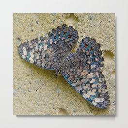 Turquoise and Sand Butterfly by Teresa Thompson Metal Print