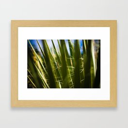 palms. Framed Art Print