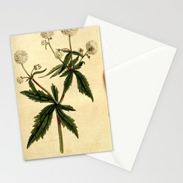 204-ranunculus aconitifolius, Mountain Crowfoot or Fair Maids of France Stationery Cards